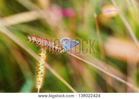 Spike Butterfly