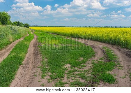 Summer landscape with earth roads on the edge of agricultural field with rape-seed