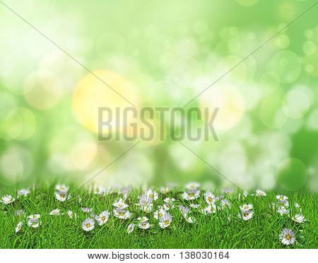 3D render of daisies in grass against a defocussed background