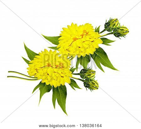 Bouquet of flowers dahlias. Flowers isolated on white background.