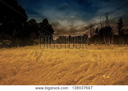The mysterious landscape of riverside meadows and wetlands with dramatic sky and yellow dry grasses. The effect obtained by the help of filters. Interesting illustration in vintage style. horizontal view