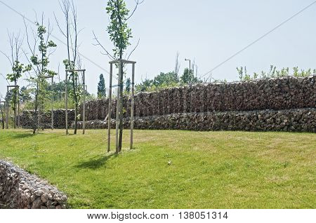 Saplings on park meadow and hexagonal wire netting gabion box wall with stones