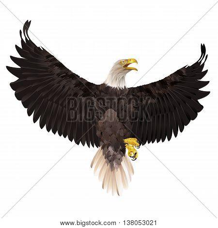 Bald eagle isolated on white background. Vector illustration.