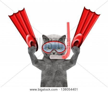 cat diving on summer holidays -- isolated on white background