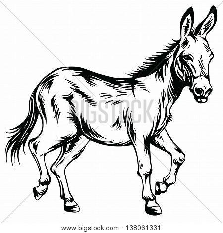 Donkey Stylized Drawing Illustration Vector Clipart art