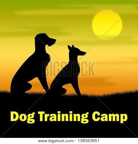 Dog Training Camp Means Coach Pups And Doggy