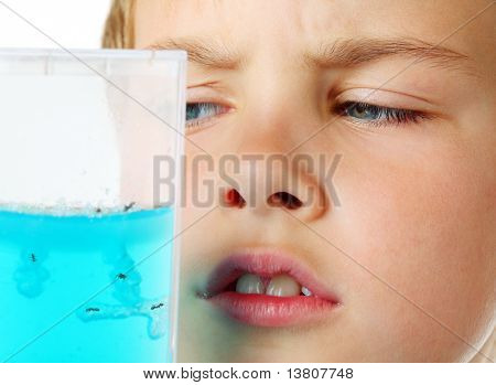 Little boy scrutiny looks into helium aquarium - ant farm - on a white background