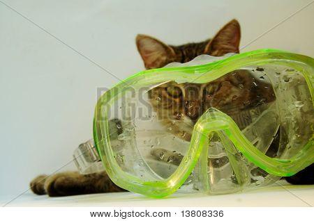 Scuba mask and cat