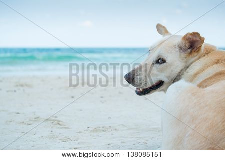 The anticipation of a dog on the beach.