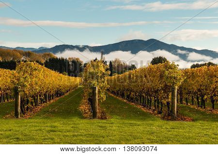 autumn vineyard with mountains and cloud inversion