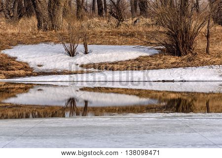 Spring natural background of ice on the river and snow bushes trees and dry grass reflected in water