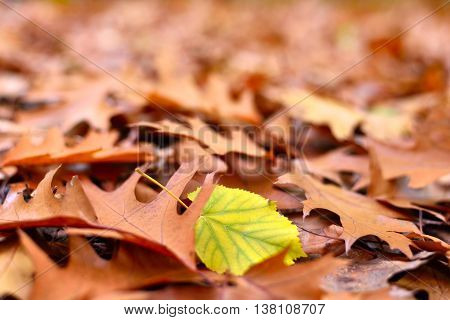 Autumn foliage on the forest floor. Selective focus on the foreground.