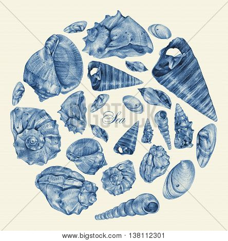 Set of different seashells drawn by hand with pencil. Pencil sketch academic drawing. Summer sea theme. Place for text