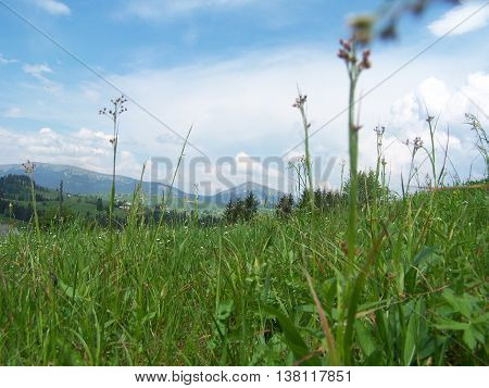Great  and magnificent  nature of the Carpathian mountains