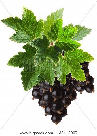 Blackcurrant Bunch (ribes Nigrum), Clipping Path