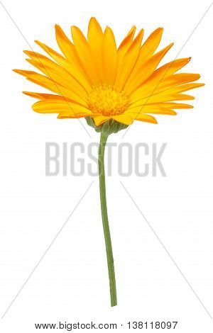 Calendula Officinalis Flowers, Clipping Path