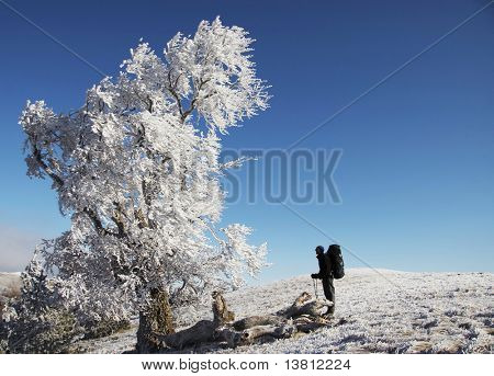 Men looking on alone frozen tree a winter