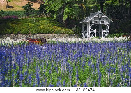 Lavender Flowers At Wellington Botanic Garden, The Largest Public Park In Capital City Of New Zealan