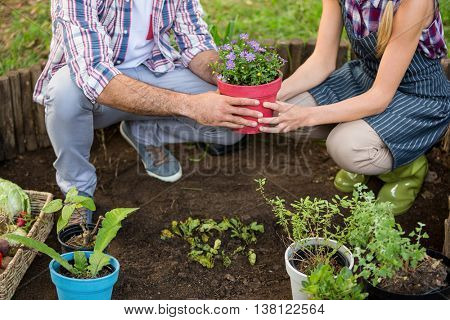 Low section of male and female gardeners holding potted plant at botanical garden