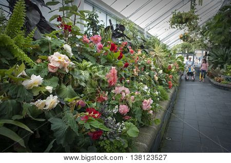 Wellington New Zealand - March 2 2016: Visitors inspecting Begonia plants grown at Begonia House in Wellington New Zealand