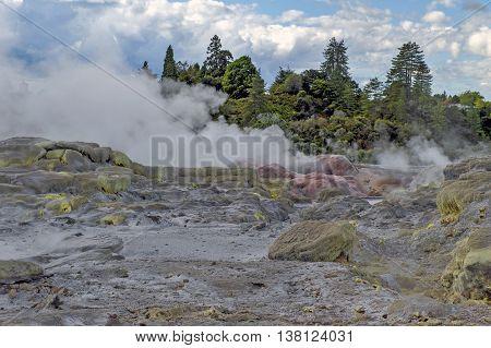 Whakarewarewa Geyser at Te Pui thermal park in geothermal valley of Rotorua New Zealand