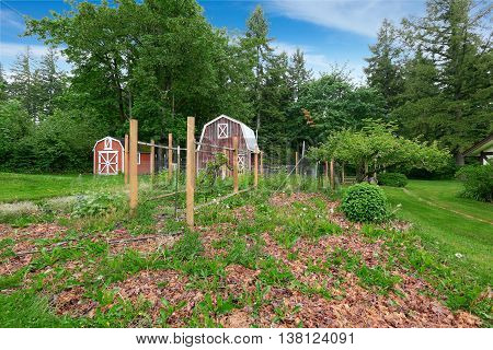 Home Garden On Backyard With  Two Red Barns Shed