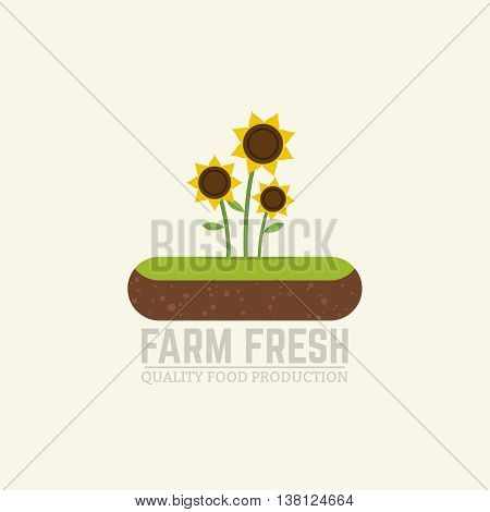 Flat vector illustration farm fresh concept sunflower oil and seeds farm. Island of soil with three sunflowers growing.