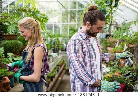 Happy young co-workers watering potted plants at greenhouse