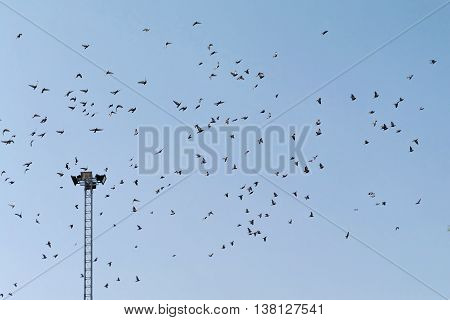 electric lighting pole with large flock of birds in the sky