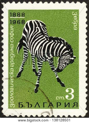 MOSCOW RUSSIA - DECEMBER 2015: a post stamp printed in BULGARIA shows a zebra (Equus quagga) the series