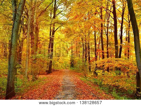 Autumn forest with sunbeam and copy space. View of a single lane road in an autumn forest.