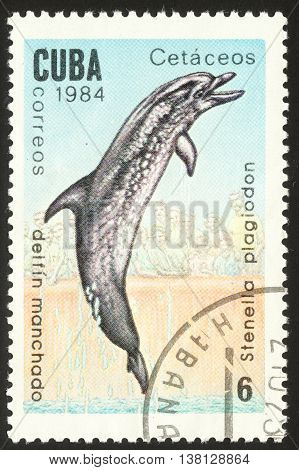 MOSCOW RUSSIA - DECEMBER 2015: a post stamp printed in CUBA shows an image of a Spotted dolphin with the inscription