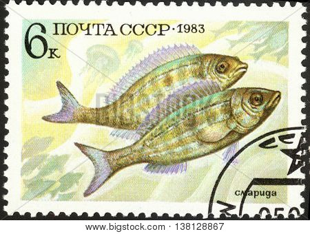 MOSCOW RUSSIA - DECEMBER 2015: a post stamp printed in the USSR shows fishes Zerro the series