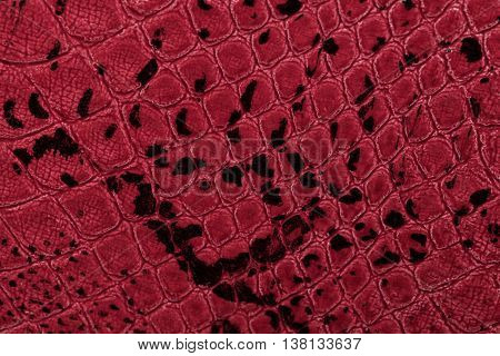 Red leather texture background. Closeup photo. Skin reptiles such as crocodile or snake.