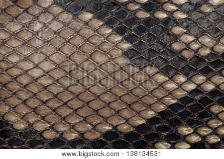 Genuine snakeskin. Leather texture background. Closeup photo. Skin reptiles such as python or cobra.