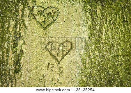 Heart shapes scratched in a tree trunk. Love symbols.