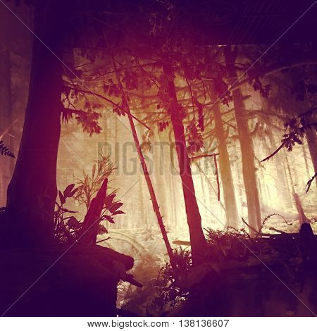 View of Forest in morning - lighting effects