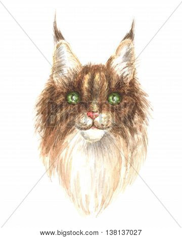 head of a maine coon. Image of a thoroughbred cat. Watercolor painting.