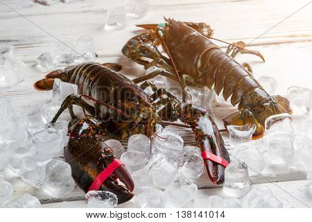 Fresh lobsters on ice cubes. Lobsters with tied claws. Expensive seafood served at restaurant. Crustaceans of big size.