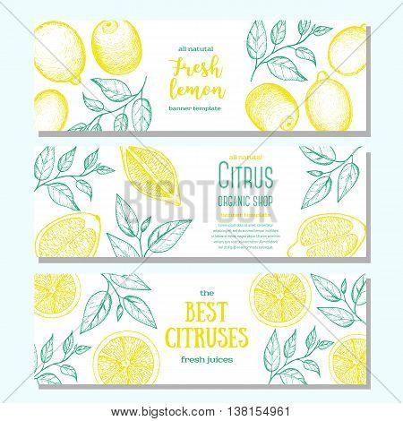 Citrus horizontal banner collection. Lemons hand drawn in ink illustration. Vector vintage illustration. Line art graphic.