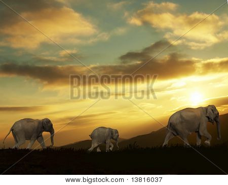 Three elephants going on sunset background