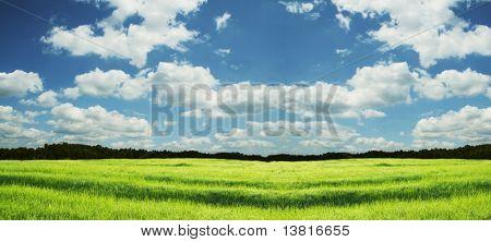 Prado verde y el cielo de fondo
