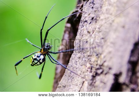 Spider on spider web with brow wood