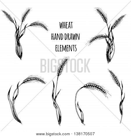 Wheat hand drawn elements. Spikelets of wheat vector illustration.