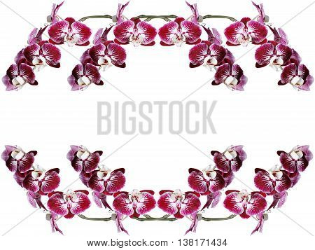 Delicate floral background of beautiful flowers isolated maroon orchid
