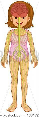 Little girl and nervous system illustration