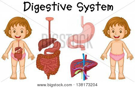 Girl and digestive system diagram illustration