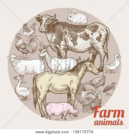 Vector illustration - color composition with various livestock poultry and inscriptions. Designed for shops of farm products advertising banners print on bags packaging wrapping paper. Vintage