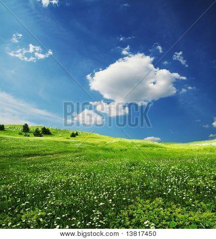 Prados verdes e céu da manhã