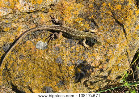 A small green lizard on the stone